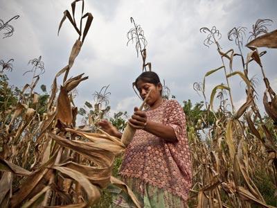 Una campesina cultiva maíz en la comunidad de Caxlampom, en Guatemala. intermón oxfam (pablo tosco)