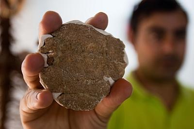 El controvertido fragmento de cráneo descubierto en Orce en 1982 y conocido como 'la galleta'. ARSENIO ZURITA