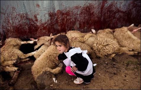 Una niña toca una oveja sacrificada en el pueblo de Babaj Bokes, el pasado 6 de mayo, durante la celebración de la tradicional fiesta de San Jorge, celebrada en varios países.