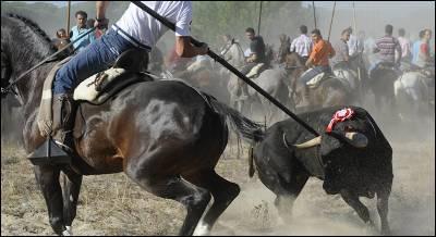 Un participante en el torneo alancea a Volante, el Toro de la Vega de 2012.-