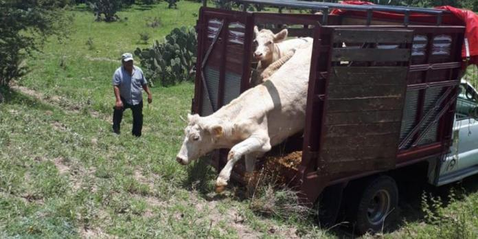 Robo de ganado repunta 50%; diputados proponen que sea delito federal