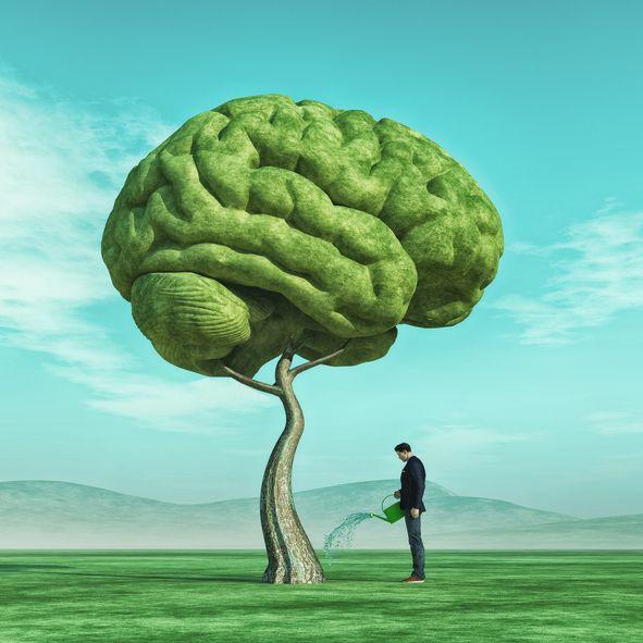 Mitos e verdades sobre o teste de QI