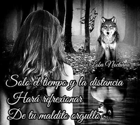 Imágenes de Lobos Solitarios con Frases Tristes de Amor