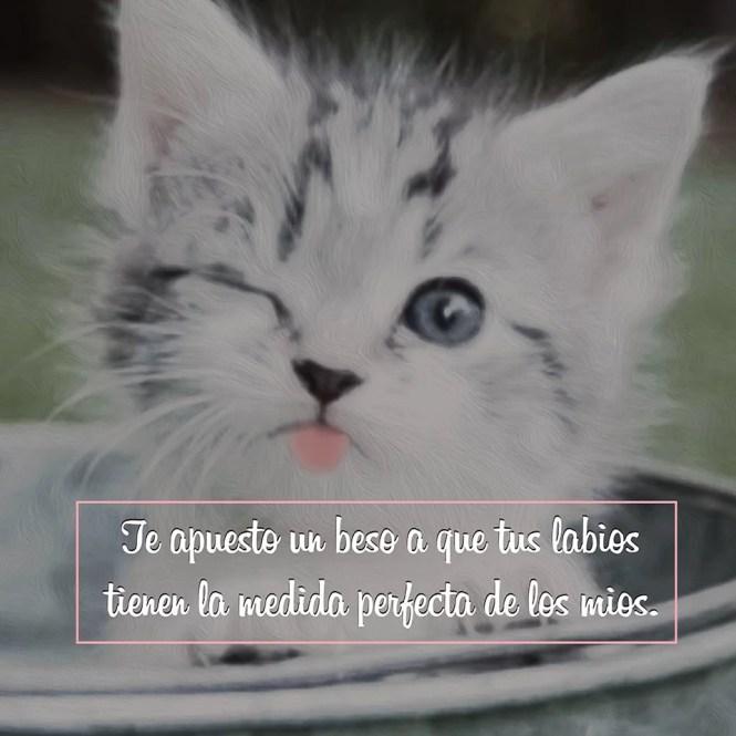 Imágenes de Gatitos Tiernos Enamorados con Frases de Amor