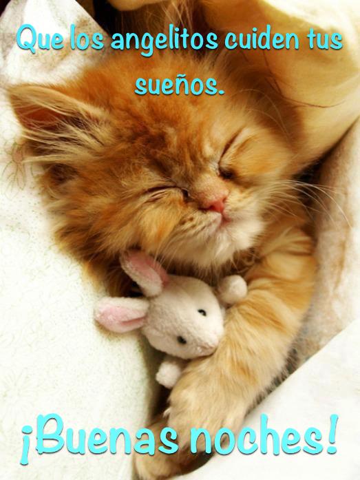 Imágenes de Buenas Noches con Gatitos Tiernos