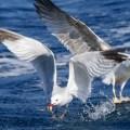 Imagenes Para Fondo De Pantalla Albatros Aves Marinas