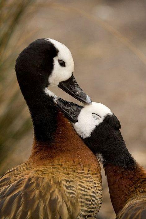 Foto de una pareja de aves enamoradas