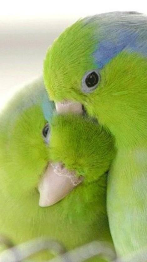 Fotos de lindas aves cariñosas y enamoradas