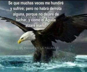 Frases En Imagenes De Águila Real