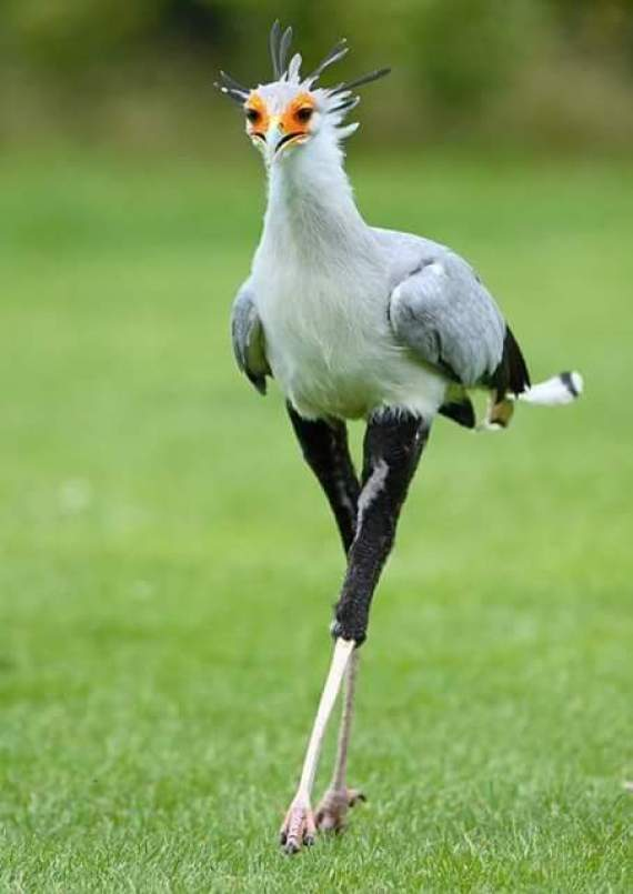 Imagenes de aves que lucen extrañas
