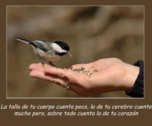 Imágenes De Aves Con Frases Para Descargar Gratis Al Celular