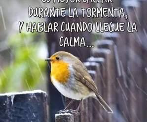 Imagenes De Aves Con Frases Para La Vida