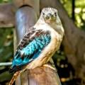 Pájaros Para Portada Celular