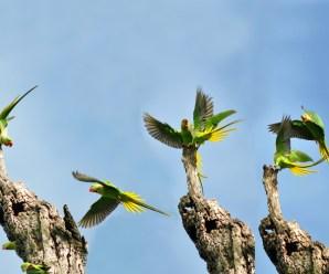 Imagenes De Aves En Grupo