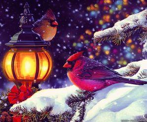 Fondos Navideños Con Aves