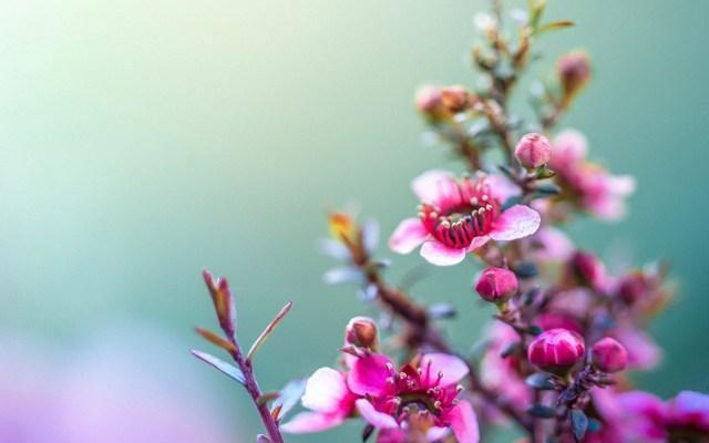 Flores bonitas para fondo de pantalla
