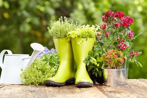 Fotos de plantas y flores sembradas en botas