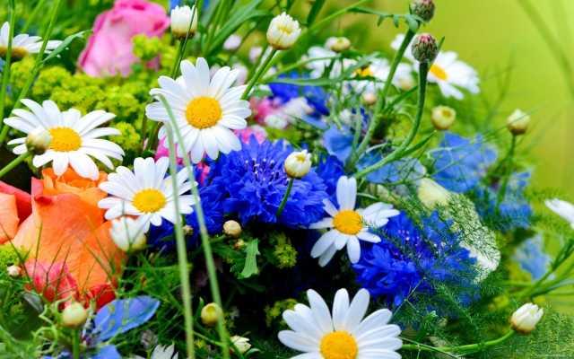 Imagen de calidad para fondo de pantalla con flores