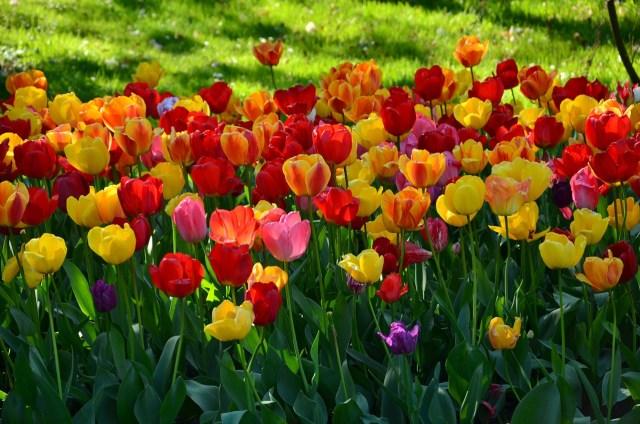 Imagen de un jardin de flores para fondo de pantalla
