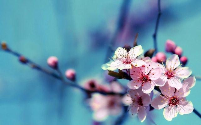 Imagenes de flores para fondo de celular