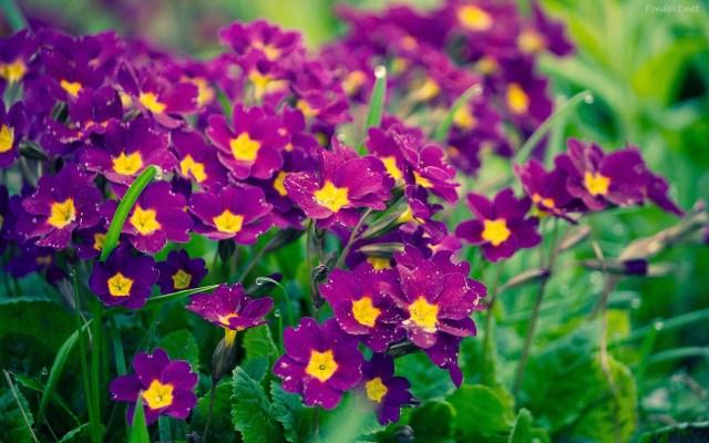 Imagenes de flores wallpaper
