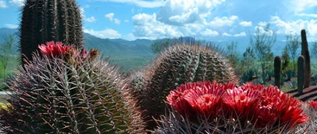 Jardines de Mexico Imagenes