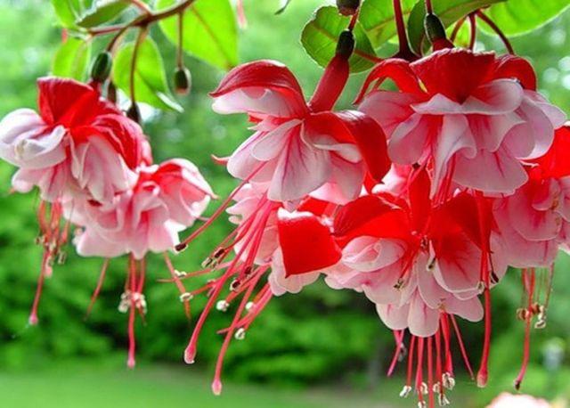 imagenes de flores para fondo de pantalla gratis