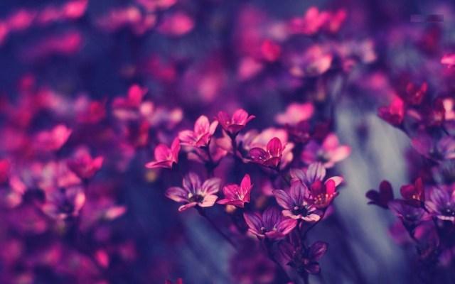primavera flores para fondo de pantalla