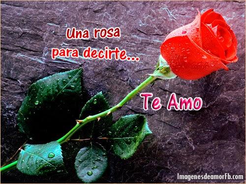 Imagen de Una Rosa Para Decir Te Amo