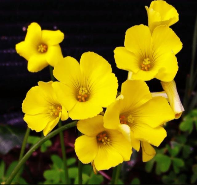 Fotos de flores amarillas para el celular
