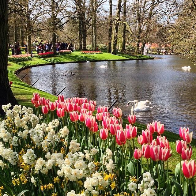 Hermosas fotos de jardines de flores para el celular
