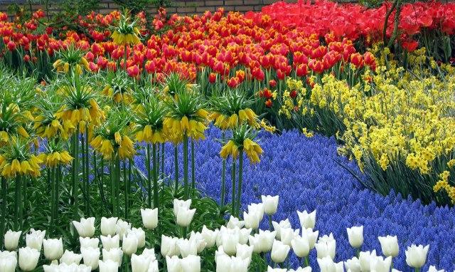 Hermoso jardin de flores Keukenhof