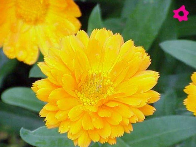 Imagen de bonitas flores amarillas