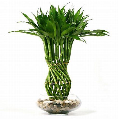 Imagenes de plantas de interior que necesitan poca luz for Jardines que necesitan poca agua