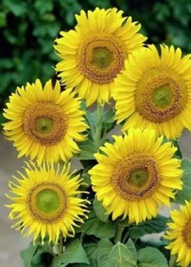 Imagenes de flores amarillas para descargar