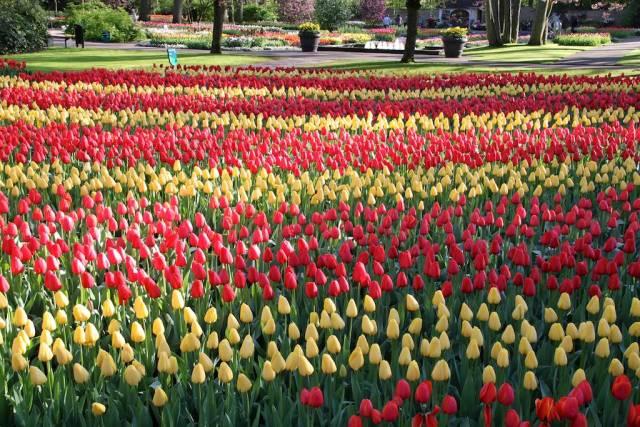 Keukenhof-en Holanda jardin de primavera