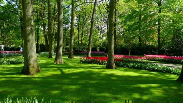 Keukenhof jardin de flores