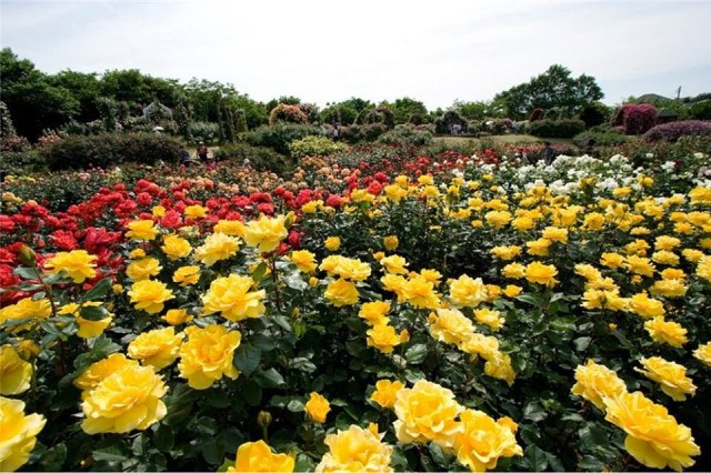 Fotos de jardines de flores para el celular