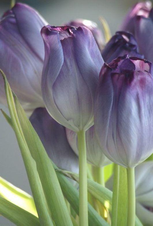 Imagenes con flores bonitas para whatsapp