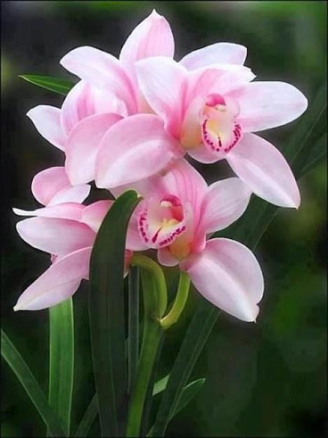 Imagenes de flores para enviar por mensaje de whatsapp