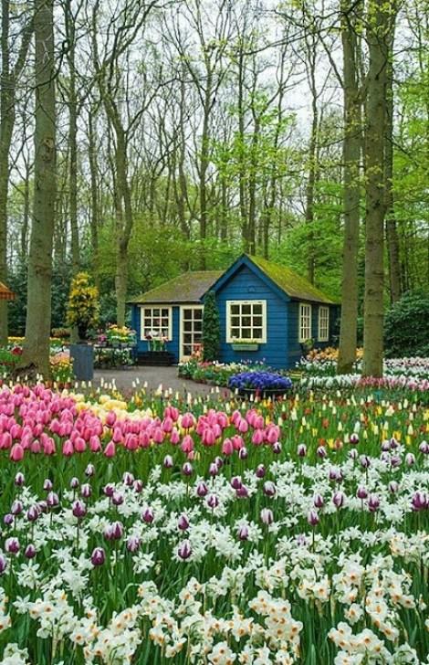 Imagenes para celular jardines con flores