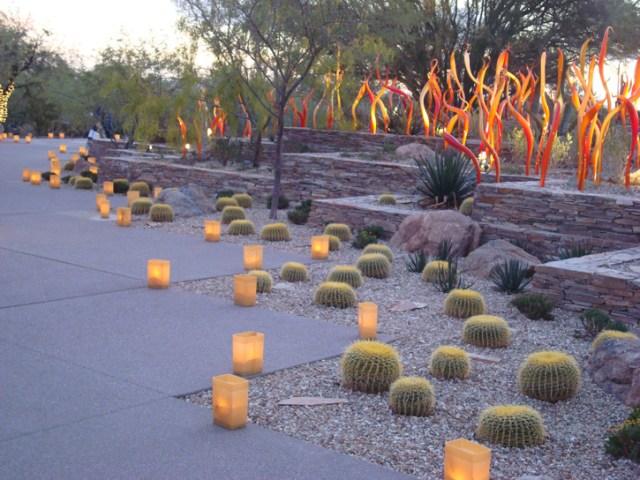 Bonitas imagenes del jardin botanico del desierto de Phoenix