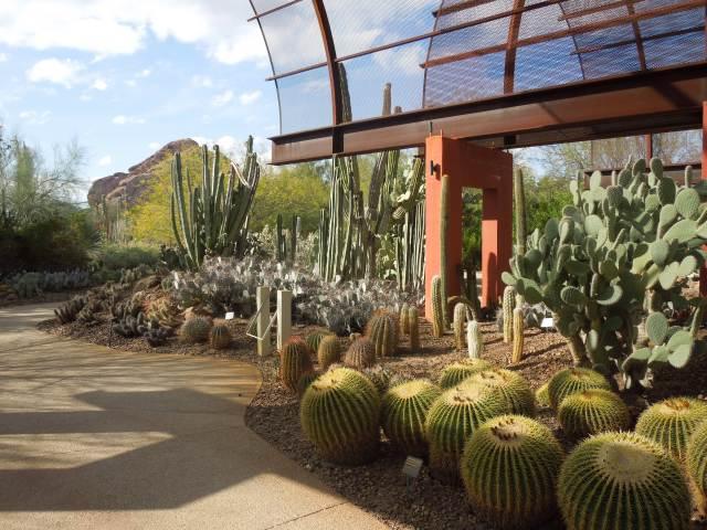 Descargar fotos del jardin botanico del desierto Phoenix