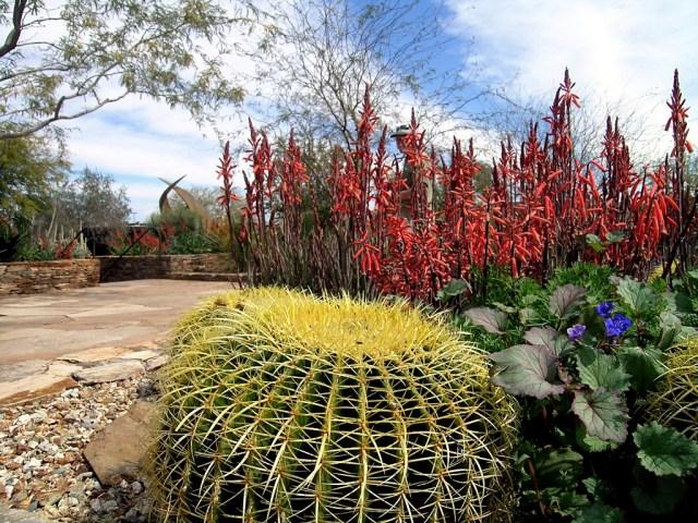 Imagenes bonitas del jardin botanico del desierto en Phoenix