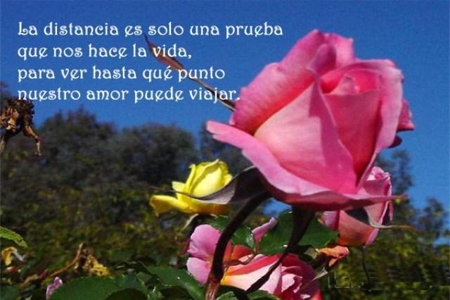 Imagenes con frases de flores con frases de amor a distancia
