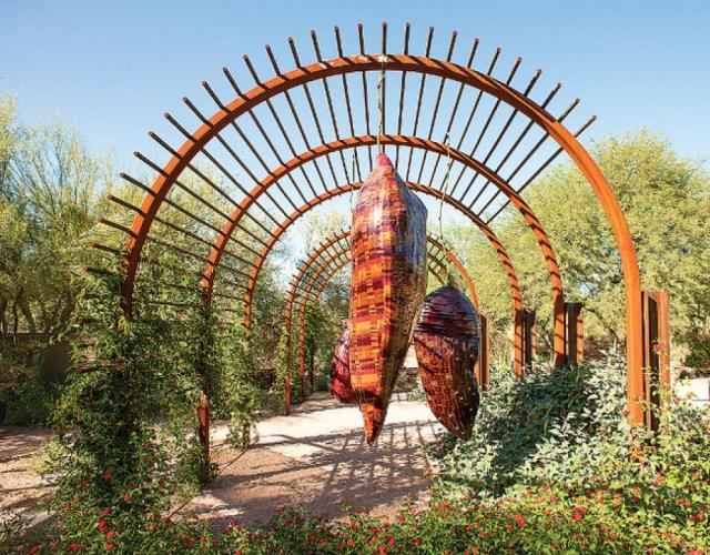 Imagenes del Jardin botanico del desierto en Arizona para compartir