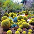 Imagenes Del Jardín Botánico del desierto de Phoenix, Arizona