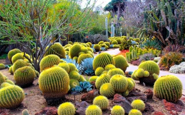 Imagenes para descargar del jardin botanico del desierto