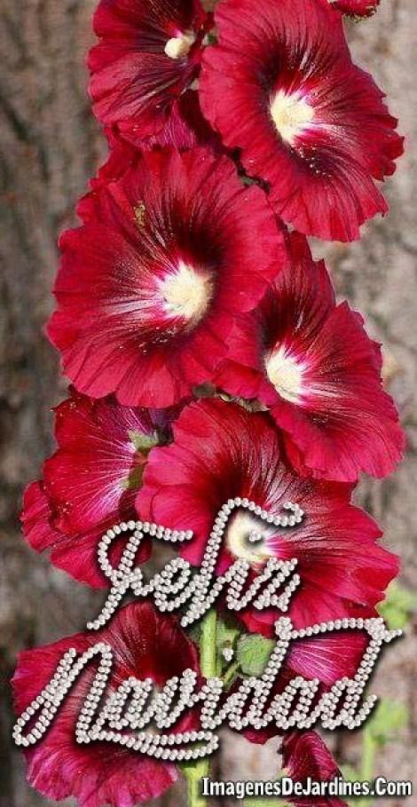 feliz-navidad-en-imagenes-con-flores-rojas