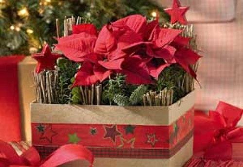 ideas-para-decorar-la-casa-en-navidad-con-flores-de-pascua